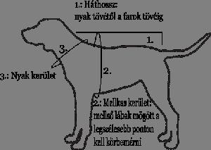 Méretvétel kutyaruhához
